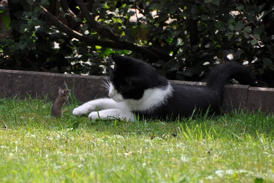 Katzenklappe mit Mauserkennung