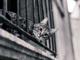 Balkontür mit Katzenklappe