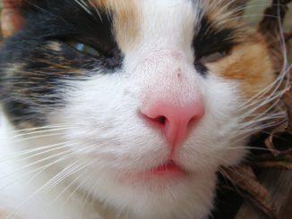 woran erkennt man gutes katzenfutter