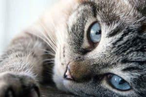 die richtige katzentoilette finden